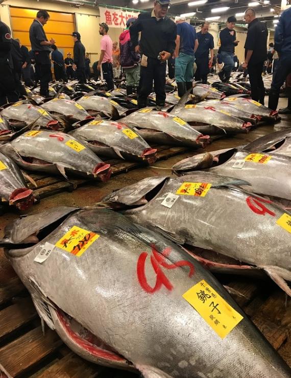 Dünyanın En Büyük Balık Pazarı Tsukiji'de Bir Sabah